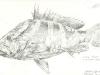 t_fish